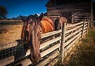 Horses @ Okeefe Ranch by Yukondick