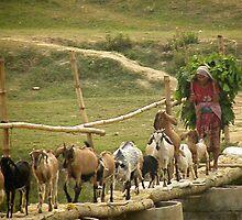 farming life in Nepal by Matt Eagles