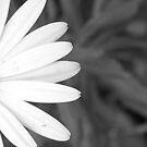 White Flower by Emma Griffen