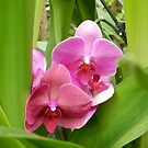 Tropical Paradise Orchid by Jeanie93