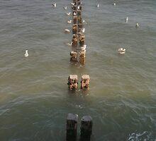 Gulls on the Water by Glen Allen