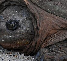 Detail Crop of Snapping Turtle by Rebecca Bryson