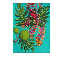 Apapane I'iwi Hanging Out In The Lobster Claw Photographic Print