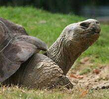 Tortoise time by Joanne Dillon