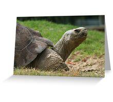 Tortoise time Greeting Card