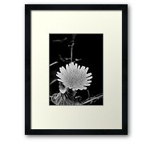 ©NS Tiny Monochrome Flower IIA. Framed Print