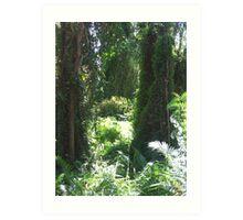 Rainforest at Victoria Point Brisbane Australia Art Print