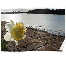 River Flower Poster
