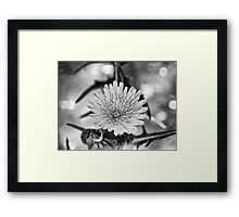 ©NS Tiny Monochrome Flower IA. Framed Print