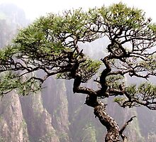 Bonsai tree on Huang Shan, Yellow Mountain, China by Sam Oakes