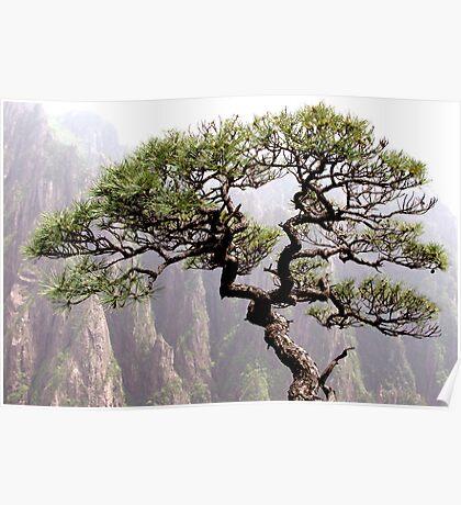 Bonsai tree on Huang Shan, Yellow Mountain, China Poster