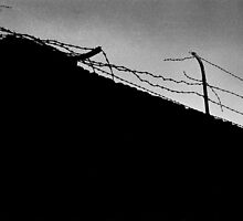 Barbed Wire by Tom Palmer