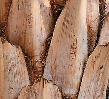 Tree bark by rhallam