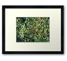 ©NS Small Forest IIIA. Framed Print