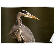 grey heron: Is this my best side? Poster