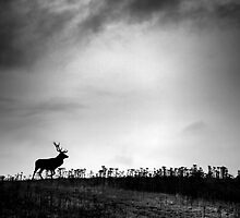 The Stag by Stuart Robertson Reynolds