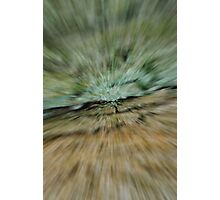 Abstract Bark Photographic Print