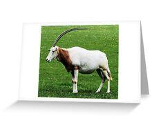 Scimitar horned oryx 6 Greeting Card