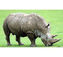 Rhinocerous 4 Photographic Print