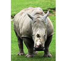 Rhinocerous 5 Photographic Print