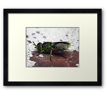 ©NS Green Hornet IA. Framed Print