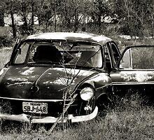 Abandon In The Fields ~ 2  ( BoneYard Series ) by Carla Jensen