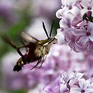 In the Sweet Lilac by Jennifer Potter