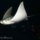 Sting Ray by MindsImage