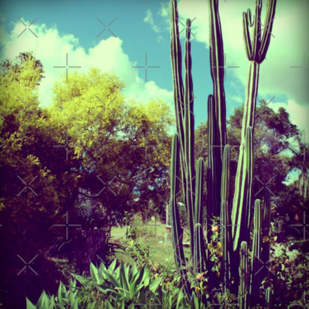 Cactus Garden by VenusOak