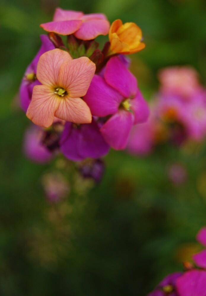 Wallflower World by photojeanic