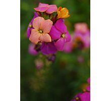 Wallflower World Photographic Print