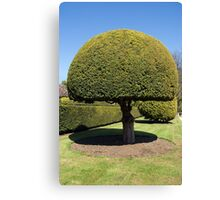 Topiary tree Canvas Print