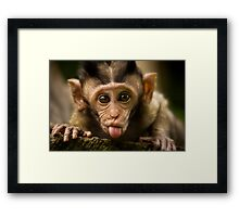 Rude Monkey Sticking Out Tongue Framed Print