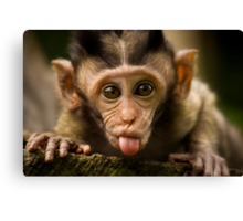 Rude Monkey Sticking Out Tongue Canvas Print