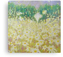 Daisies In A Sussex Meadow Canvas Print