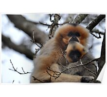 Gibbon Mummy Love Poster