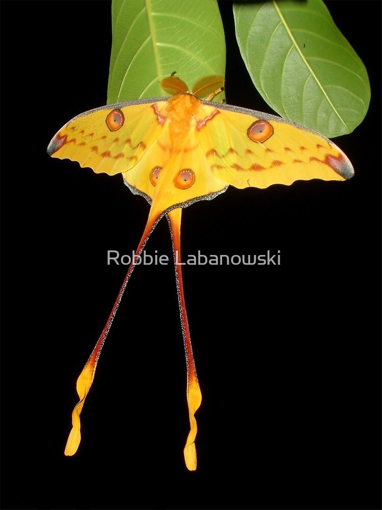 Comet Moth by Robbie Labanowski