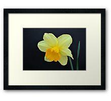 A Single Daffodil Framed Print