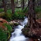 Sycamore Canyon Springs by ParkDG