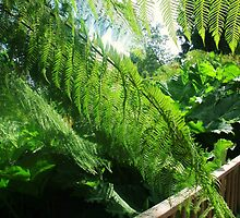 Tropical Green Fern, Cornwall by MichelleRees