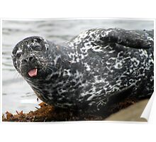 Cambria Seal Poster