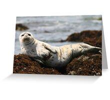 Injured White Seal Greeting Card