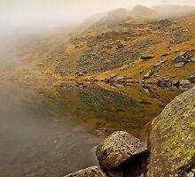 A brief view by Shaun Whiteman