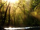 Light by NatureGreeting Cards ©ccwri