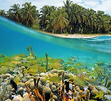 Coral reef fish underwater and coconut trees by Seaphotoart