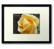 My First Yellow Rose 1 Framed Print
