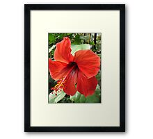 Postbox Red Framed Print