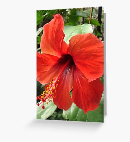 Postbox Red Greeting Card