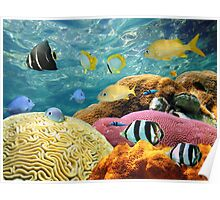 Colorful corals and tropical fish underwater Poster