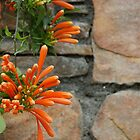 Wall flower / Muurbloempje by sharkyvin